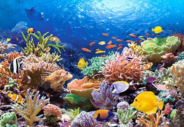 arrecifes-de-coral