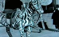El Circo Charles Chaplin viajero tiempo