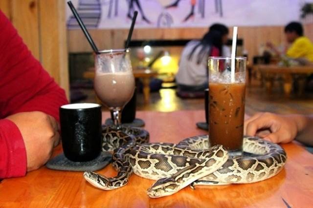 Cafetería donde tomar algo en compañía de reptiles en Japón