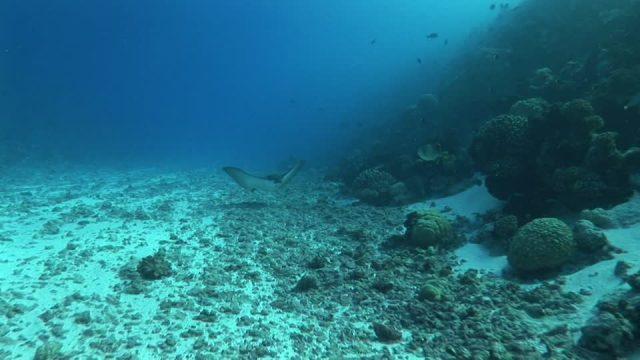 El oceano intraterrestre que tiene desconcertados a los científicos