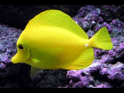 Sabias que los peces pueden tener sed